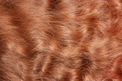 Red hair textured Royalty Free Stock Images