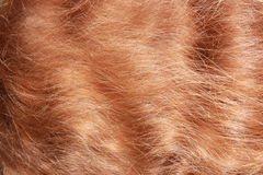 Red hair textured Stock Images