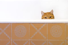 Red-haired cat. In red bathtub stock photography