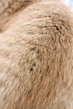 Red-haired cat hair, close-up. Background Royalty Free Stock Photo