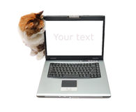 Red-haired cat near notebook Royalty Free Stock Photography