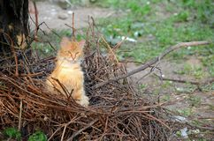 Red-haired cat in the nest Stock Photography