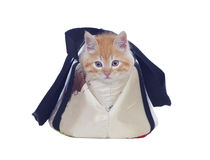 Red haired cat tucked into its carrying bag Royalty Free Stock Images