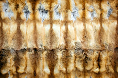 Red-haired fox fur background Royalty Free Stock Images