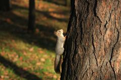 Red-haired furry squirrel in the park Stock Images