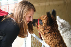Red-haired girl and an alpaca. Red-haired girl looks at an alpaca, New Zealand Royalty Free Stock Photography