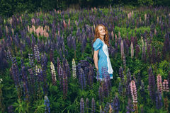Red-haired girl in blue dress with lupines. Red-haired woman in blue dress with lupines Royalty Free Stock Images