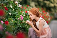 Red-haired girl child sniffing a rose in blooming garden in summer. Red-haired girl child sniffing a rose in a blooming garden in summer