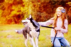Red-haired girl in jeans plays with a dog of the breed of husky. Autumn walk with a dog. Cheerful game girls with a dog stock photos