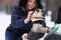 Red haired girl with pug dog. Red haired teen girl playing with funny pug puppy on snow in the park Stock Image