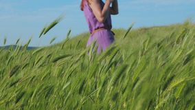 A red-haired girl in a purple dress walks along a path along a field of green grass and spikelets swaying in the wind. In the background is blue sky, mountains stock footage