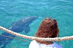 A red-haired girl sits on a pier and watches a free dolphin swimming under water in the Red sea. A sunny day and clear water royalty free stock photo
