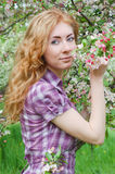 Red-haired woman among apple blossom Stock Photo