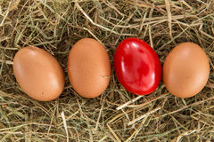 Red egg on straw with plain ones Stock Photos