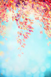 Red hanging foliage branch on blue blurred sky background with bokeh Royalty Free Stock Image