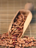 Red haricot beans Stock Photos