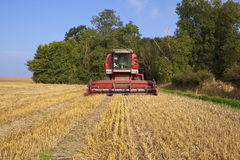 Red harvester Royalty Free Stock Images