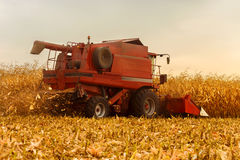 Red harvester working on corn field Royalty Free Stock Photo