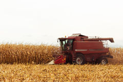 Red harvester working on corn field Royalty Free Stock Photos