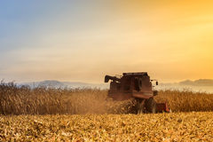 Red harvester working on corn field Royalty Free Stock Images