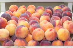Red Haven Peaches in a bin on display in a Farmers Market. Grown in Hood River, Oregon, United States. Horizontal closeup of many peaches in a market stock image