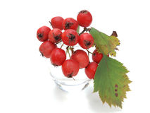 Red haw berries in glass Stock Photo