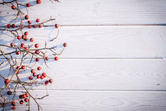 Red hawthorn berries on a white background Royalty Free Stock Photos