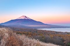 Red Head Beni Fuji at Lake Yamanaka during the sunrise view fr stock image