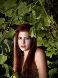 Red Head Among Grape Leaves Stock Images
