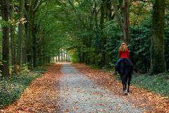 Woman horse riding forrest royalty free stock image