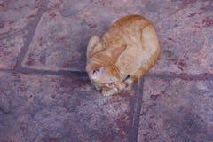 Red-headed kat royalty-vrije stock afbeelding