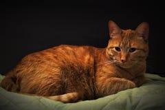 red-headed kat op een groene algemene en zwarte achtergrond stock afbeeldingen