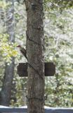 Red headed wood pecker. A red headed wood pecker on a tree royalty free stock photo