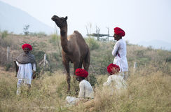 Red heads. Camel traders of Pushkar, Rajasthan, India with camel Royalty Free Stock Photos