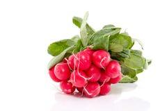 Red healthy radish Stock Photography