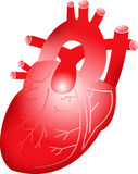 Red heart. Illustration art of a red heart with isolated background Royalty Free Stock Photos