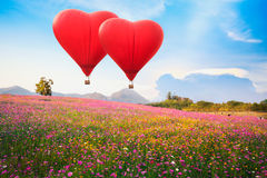 Red heart air balloon over on Beautiful Cosmos Flower Royalty Free Stock Photo