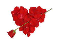 Red heart with arrow from rose Stock Image