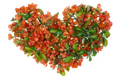Red heart of the Asian Royalty Free Stock Photo