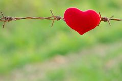 Red heart and barbed wire. Royalty Free Stock Photos