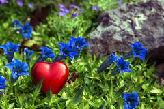 Red heart on blue bavarian gentians Royalty Free Stock Image