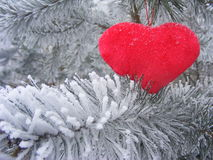 Red heart on the branch of pine for valentine day. Red heart love on the branch of pine for valentine day Royalty Free Stock Photography