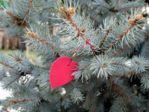 Red heart on the branches spruce, summer Stock Image