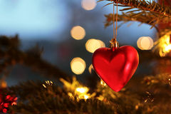 Red heart on a christmas tree Stock Photography