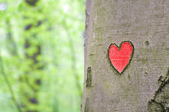 Red heart engraved in the tree. Closeup royalty free stock image