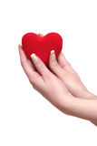 Red heart in female hands. On a white background Royalty Free Stock Images