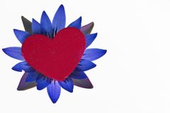 Red heart on flower Royalty Free Stock Image