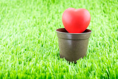 Red heart on flower pot at green field,spring concept.  Stock Image