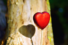 Red heart in garden as background Royalty Free Stock Images