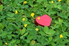 Red heart in garden texture. Valentine heart. Stock Photos